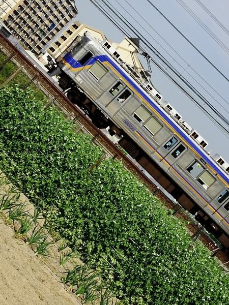 南海6300系 (萩原天神〜北野田)