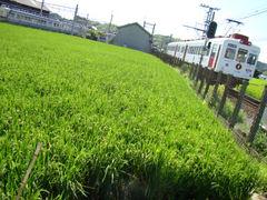 和歌山電鐵2270系&いちご電車(伊太祁曽車庫付近)