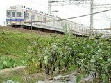 7100系(泉佐野〜井原里間)