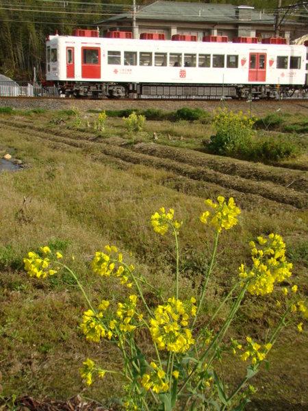 2270系いちご電車 (西山口〜甘露寺前間の農道から)