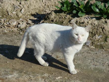 さきほど上り線を渡っていた野良猫。