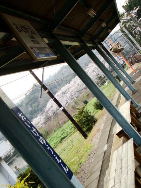 駅からは大池遊園の桜並木が一望でき、駅周囲に咲き乱れる桜も楽しめます。